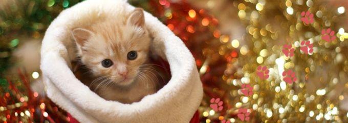 クリスマス編2 ミカの贈与税は誰が払うニャ?